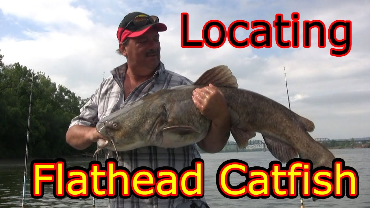 how to catch big catfish in rivers