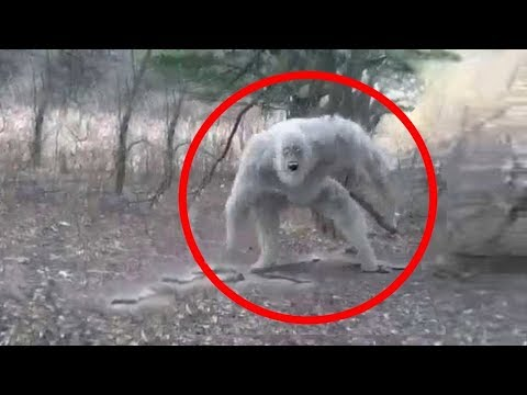 5 Ogres Caught on Camera & Spotted in Real Life