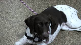 Pet Exercise And Socialization