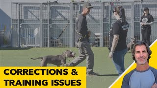 Dog Training and Correcting Issues  Robert Cabral ask me anything
