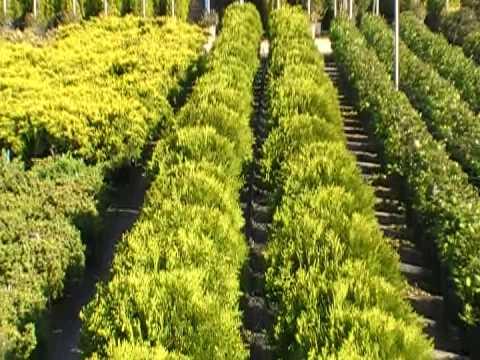 viveros angol c b jardiner a y productores de plantas