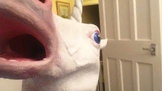 unicorn fun.