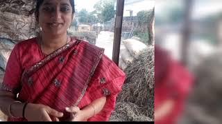 సంక్రాంతి సంబరాలు ||telugammayi ||bysandhya