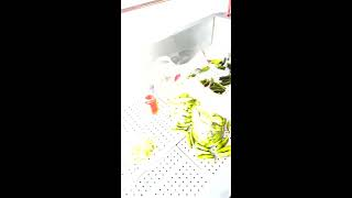 Çubuk Turşu Tarifi - Doğal turşu tarifi turşu siparişi