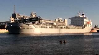 Port Adelaide Shipping _ (570) CSL Thevenard