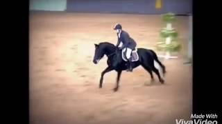 Конный спорт риск
