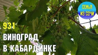 Виноград в Кабардинке | Жизнь на Юге