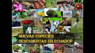 Nuevas especies descubiertas en Ecuador