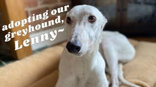 we adopted an exracing greyhound