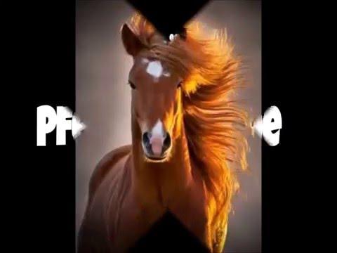 10 schöne Pferdesprüche