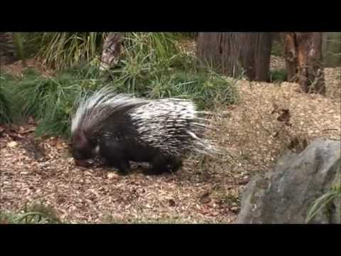 Thumbnail: Family Day at Auckland Zoo, New Zealand