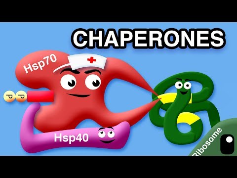 CHAPERONES AND MISFOLDED PROTEINS