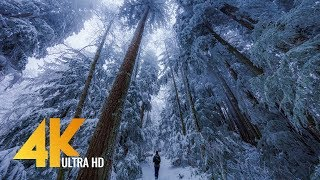 Walking in a Snow Forest 4K UHD with Piano Music #2 - Squak Mountain Fireplace Trail, WA