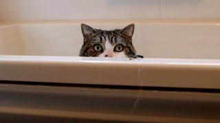 お風呂で遊ぶねこ9。-Maru plays in the bathtub 9.- thumbnail
