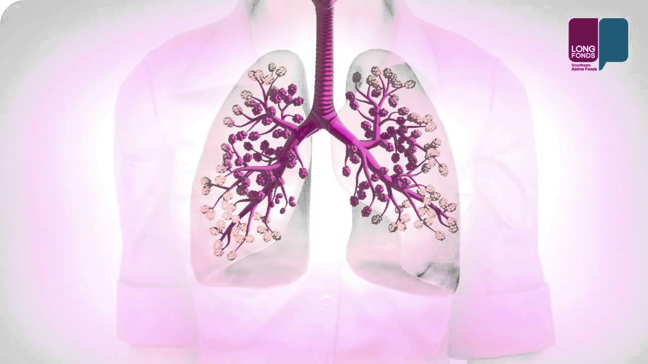 Akciğerler Nasıl çalışır Youtube