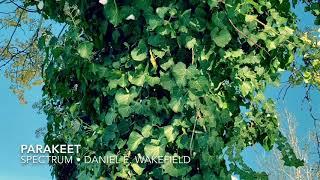 Daniel E. Wakefield - Parakeet