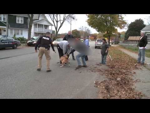 Pit bull attack