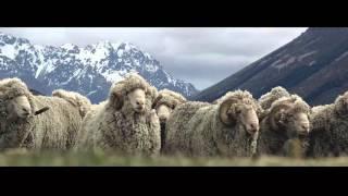 SILERE alpine origin merino story