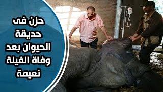 حزن فى حديقة الحيوان بعد وفاة الفيلة نعيمة.. حارسها باكياً: فقدت أغلى حاجة عندى