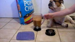 How to introduce puppies to dog food -feed puppies  (Breeder information)
