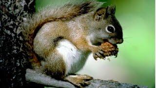 Половое размножение животных (2). Биология 6 класс.
