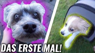 Hund FLASH findet seine erste FREUNDIN! **wild**