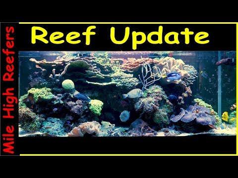 Reef Updated 111218