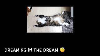 TRS - ฝันที่อยู่ในฝัน (cover)
