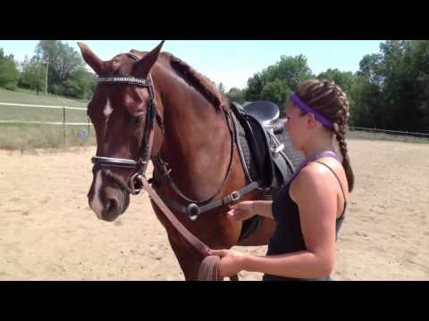 How to use Side Reins