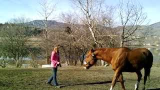 Liberty Horsemanship Training