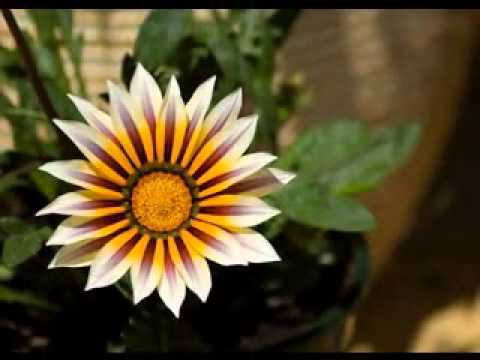 most unique flowers in the world, Beautiful flower