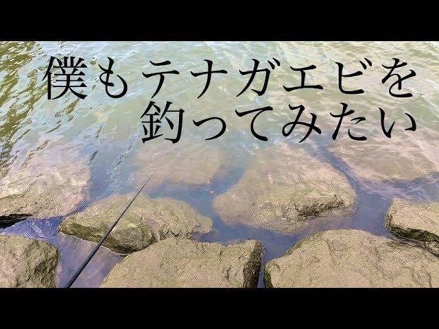 岩渕水門でテナガエビ釣り!