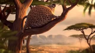 Video Animasi Lucu - Kumpulan hewan gendut lucu
