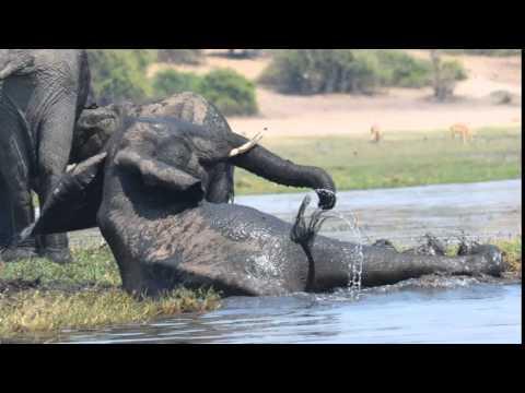 Traveling in Zimbabwe