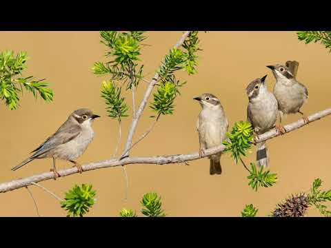 Утреннее пение птиц в лесу. Звуки природы без музыки. Youtube.