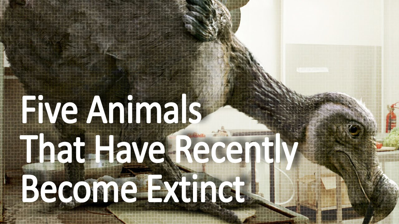 Five Animals That Have Recently Become Extinct - Youtube-2156