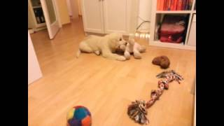Cute Puppy Lila Playing With Her Stuffed Animal