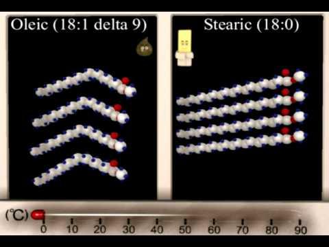 Lipid Structure Function Animation