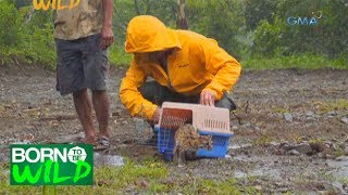 Born to Be Wild: Releasing the Visayan Leopard Cat back into the wild