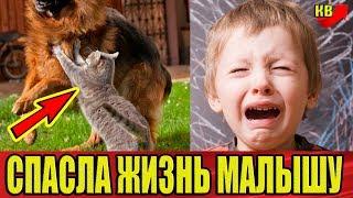Кошка героически встала на защиту малыша от лабрадора. Подробности.