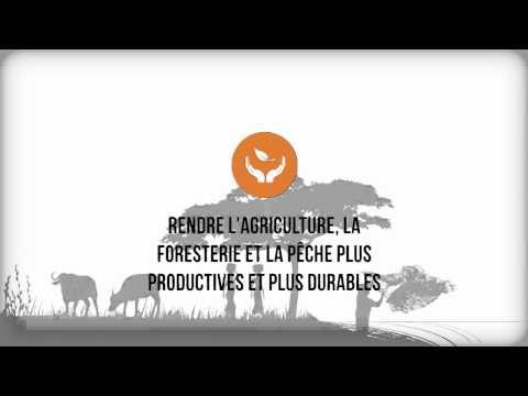 Objectifs stratégiques de la FAO