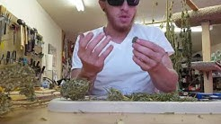 Trimming with Tyler: How To trim weed... super easy
