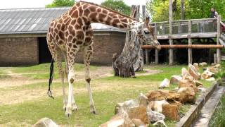 Hallo Animal fans! We visited the ZSL London zoo . Most lovely. You...