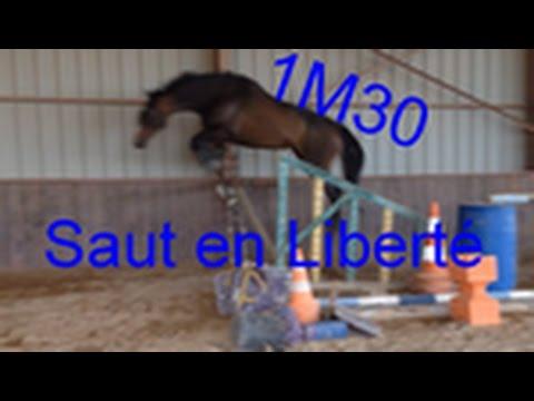 Vlog n°3 : Une séance avec nous : Saut en Liberté :: 1M25 !!