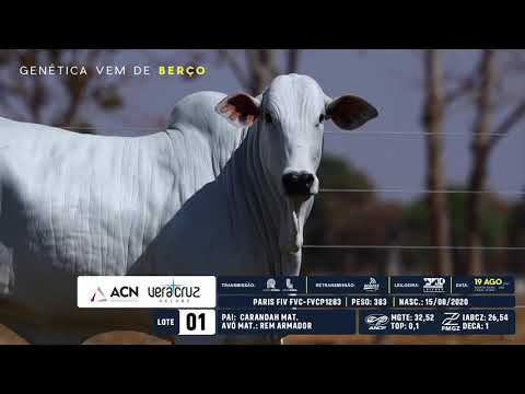 LOTE 01