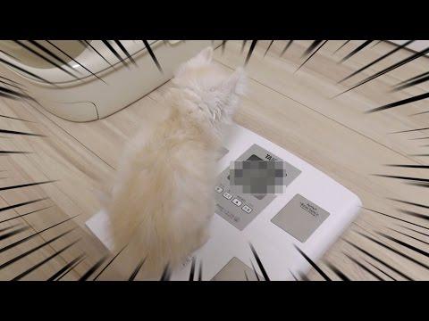 マロンの体重が驚愕だったwww