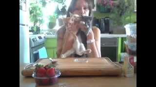 My Kittens Helping Me Make A Vegan Cheesecake