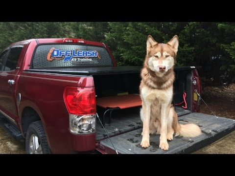 Huskies Can't be Off Leash Trained | 2 Year Old Husky | Dog Training Stuarts Draft