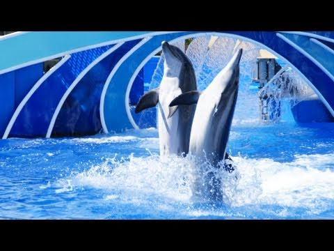 Blue Horizons (Full Show) SeaWorld San Diego