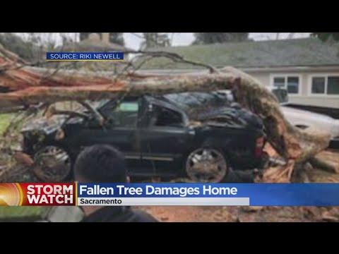 Massive Tree Crashes Into Sacramento Home
